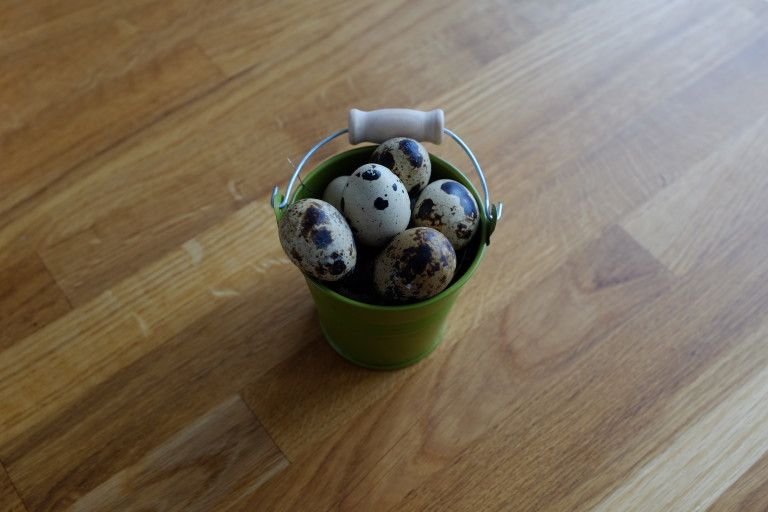 Little, green bucket filled with quail's eggs